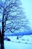 Zimny ranek Zdjęcie Royalty Free