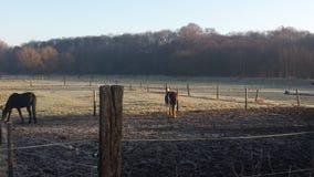Zimny ranek Fotografia Royalty Free