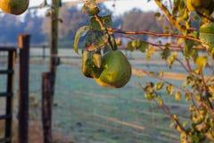 Zimny ranek w Październiku wieś, arousal obrazy stock