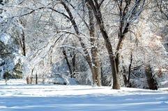 Zimny zima dzień zdjęcia royalty free