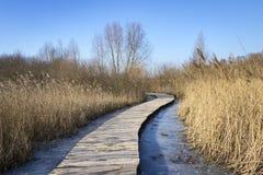 Zimny zima dzień, drewniana ścieżka w Uckermark fotografia royalty free