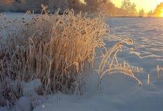 Zimny zima dzień Obraz Stock