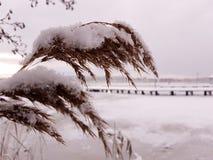 Zimny zima dzień Zdjęcie Stock