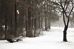 Zimny zima dzień w miasto parku Fotografia Royalty Free