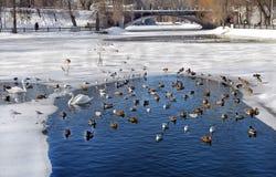 Zimove ptaki w miasto parku Obrazy Stock