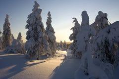 zimowa kraina czarów laponii Obrazy Royalty Free