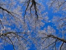 zimowe niebo obrazy royalty free