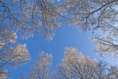 zimowe niebo Zdjęcie Stock
