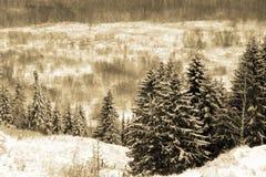 zimowy dzień Zdjęcia Royalty Free
