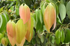 Zimt-Blätter Stockbild