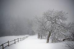 Zimy ścieżka w Gigantycznych górach obraz royalty free