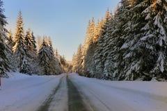 Zimy śnieżna droga, aleja świerkowi drzewa wzdłuż drogi frosted z śniegiem błękitne niebo Zdjęcia Stock