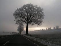 Zimy światło zdjęcia stock