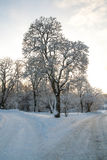 5 zimy Zdjęcia Stock