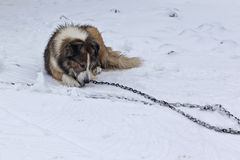 39 zimy Fotografia Royalty Free
