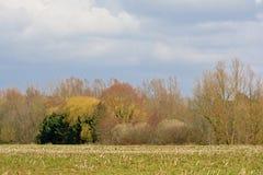 Zimy agrarny pole z kolorowymi drzewami behind Zdjęcie Royalty Free
