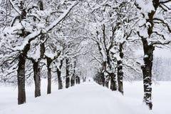 Zimy aleja Obrazy Stock