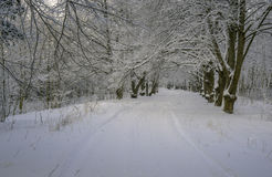 Zimy aleja w parku Zdjęcie Royalty Free