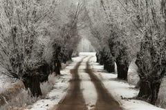 Zimy aleja wierzby zdjęcie stock