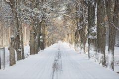 Zimy aleja z selekcyjną ostrością Obraz Stock