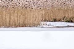 Zimy bagna tło Zdjęcie Royalty Free