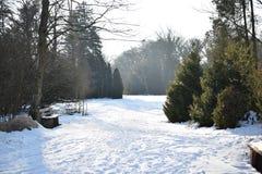 Zimy bajka zdjęcia royalty free