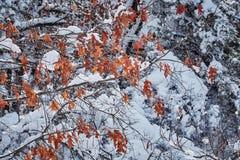 Zimy bajka patrzeje po śnieżyca natury piękna Obraz Royalty Free
