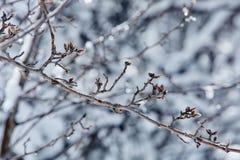 Zimy bajka patrzeje po śnieżyca natury piękna Fotografia Stock