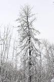 Zimy bajka w lesie Zdjęcie Stock