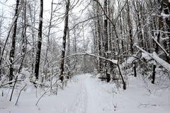 Zimy bajka w lesie Obrazy Stock
