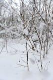 Zimy bajka w lesie Zdjęcia Stock