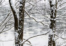 Zimy bajka w lesie rzeką zdjęcie royalty free