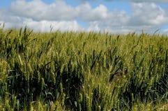 ZIMY banatki gospodarstwa rolne obraz royalty free