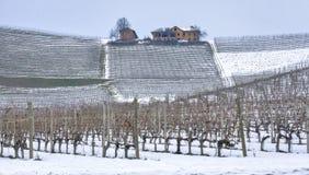 Zimy Barolo winniców panorama koloru córek wizerunku matka dwa Zdjęcie Stock