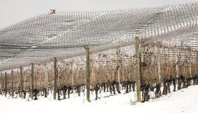Zimy Barolo winniców panorama koloru córek wizerunku matka dwa Fotografia Stock