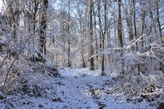 zimy biały forrest zdjęcie stock