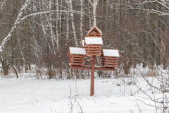Zimy brzozy zimy lasowy Snowing tło Czerwony gniazdować pudełko obraz royalty free