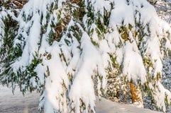 Zimy burza w appalachia Fotografia Royalty Free