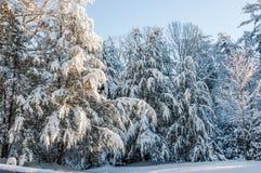 Zimy burza w appalachia Zdjęcie Royalty Free