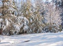 Zimy burza w appalachia Obrazy Stock