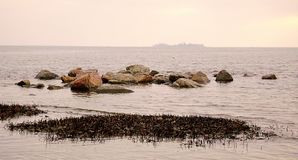 Zimy Czarny morze Gałąź drzewo nad nawadniają czarny morze Linia brzegowa piaskowata plaża na chmurnym dniu Obraz Stock