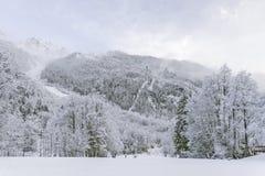 Zimy drewna krajobraz Zdjęcia Royalty Free