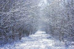 Zimy drewniany drogowy tunel zdjęcie royalty free