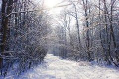 Zimy drewniany drogowy tunel obrazy royalty free