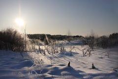 zimy drewno Obraz Stock