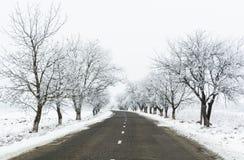 Zimy droga pośrodku oszrania zakrywający drzewa Obraz Stock
