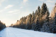 Zimy droga przez lasu Zdjęcie Royalty Free