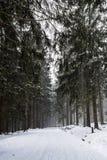 Zimy droga wśród lasów w górach Zdjęcia Royalty Free