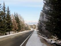 Zimy droga z drzewami Zdjęcia Royalty Free