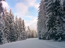Zimy droga z śniegu i szpilek drzewami Zdjęcia Stock